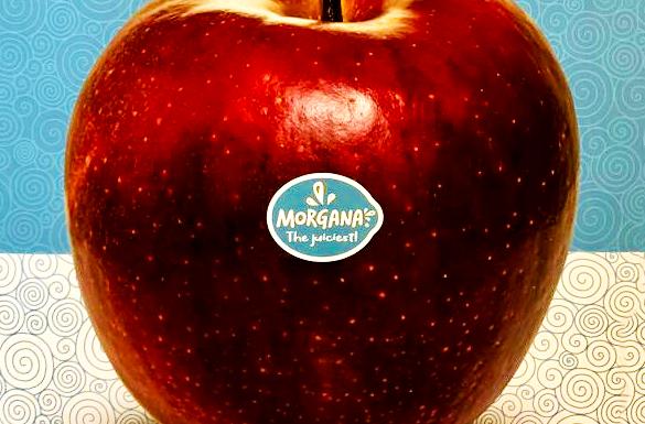 morgana appel