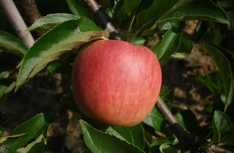 zari appel carolus